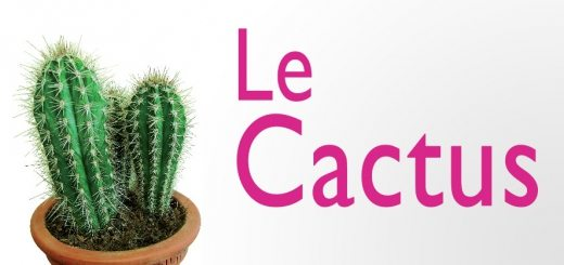le-cactus